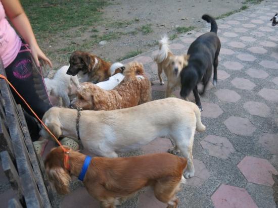 doglock
